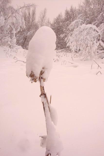 Снежный цветок на Семейной горе! Отличн