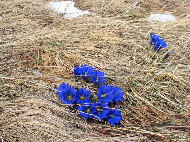 Вот такие замечательные цветы в ПриДата: 1-4 мая 2011 годаФо
